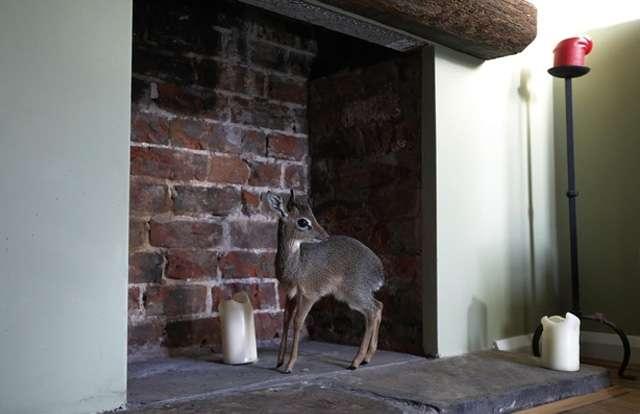 Cachorrodeantilope